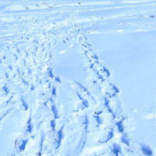 雪かき・除草でお困りの方はご相談下さい。