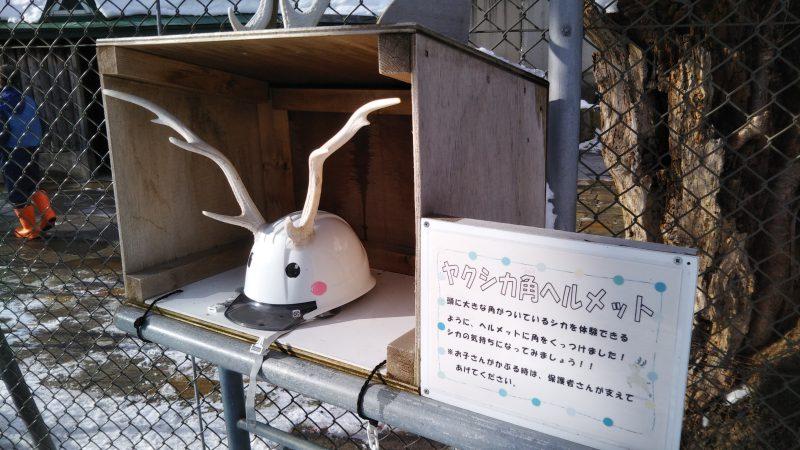函館公園のヤクシカの角