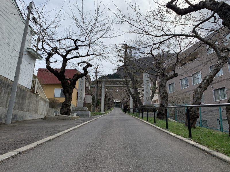 住三吉神社 桜 桜並木
