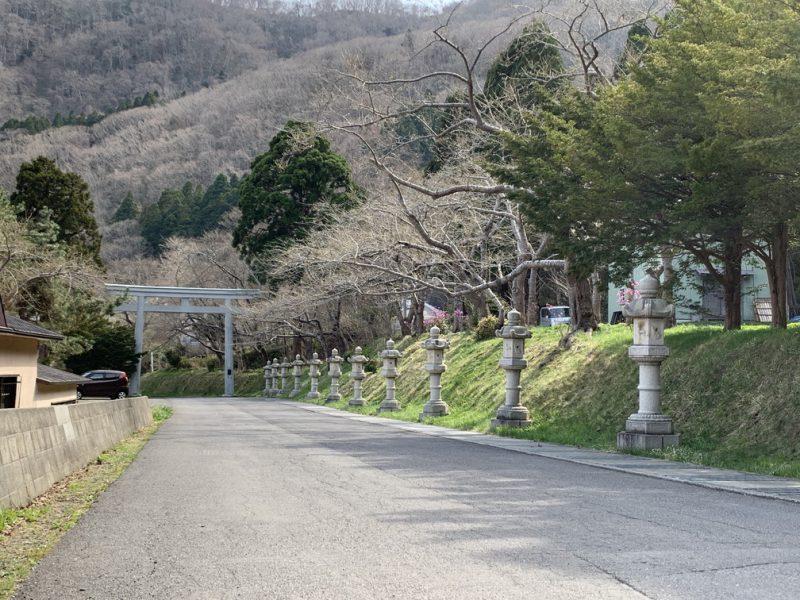 函館 八幡宮 桜 神社
